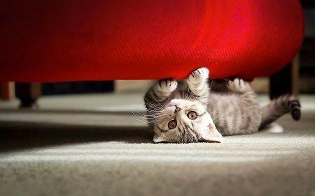 Почему в Библии кошка не упоминается ни разу?