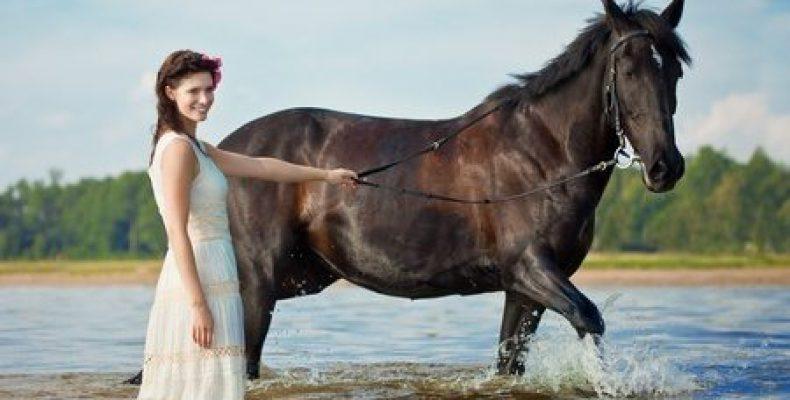 Символика лошади